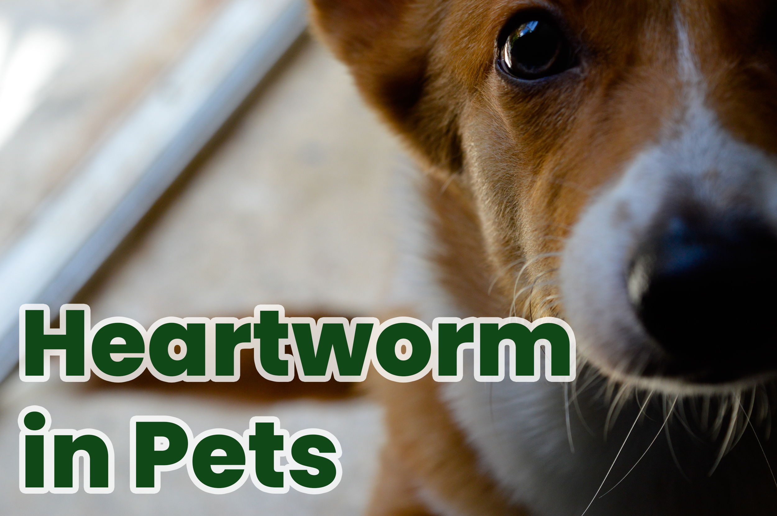 Heartworm in Pets
