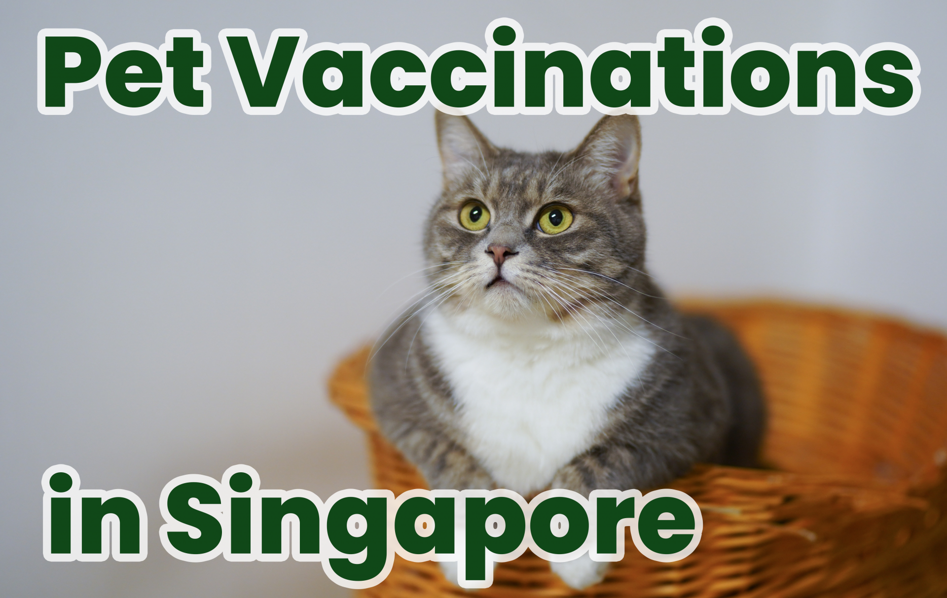Pet Vaccinations In Singapore What Every Pet Owner Should Know